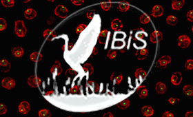 IBiS emblem of bird taking flight